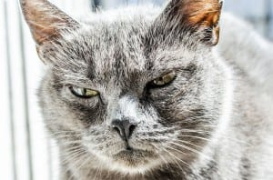 "Graphic Designer - This cat is angry because his client asked him to do a 10 page website ""really quickly""."