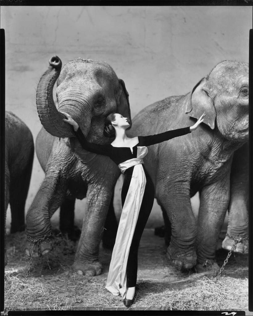 Richard Avedon's landmark 1955 fashion photo: Dovima with the Elephants. Woman stands between two elephants in an ankle length evening gown.