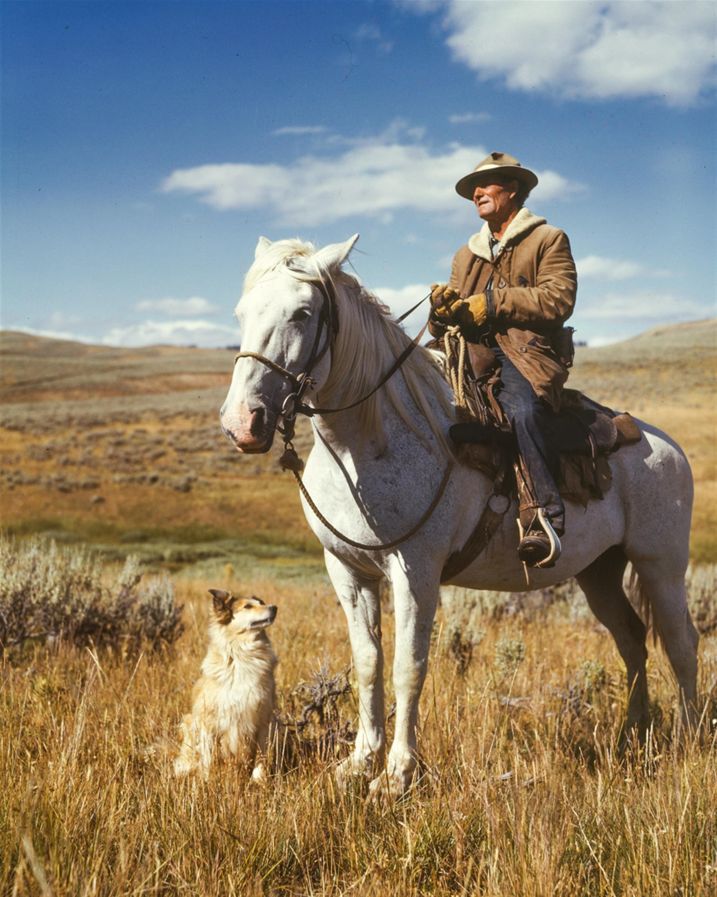 cowboy sat on horse in field with dog by his side